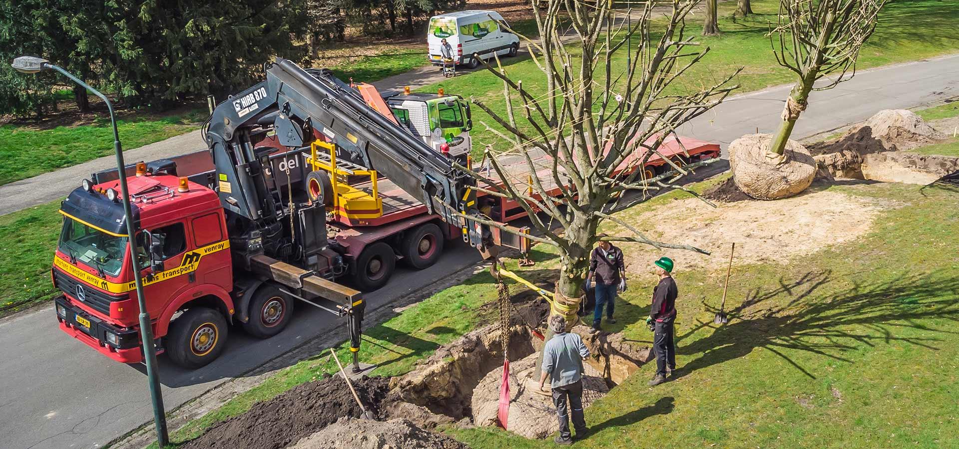 Annapark adopteert 9 Lindebomen